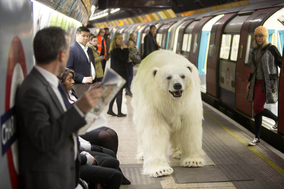 Polar Bear london 2015
